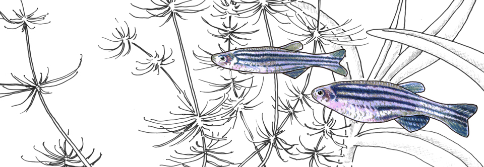 NASCE_Poisson_240x80final